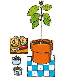 basteln mit kindern kostenlose bastelvorlage natur avocado pfl nzchen. Black Bedroom Furniture Sets. Home Design Ideas