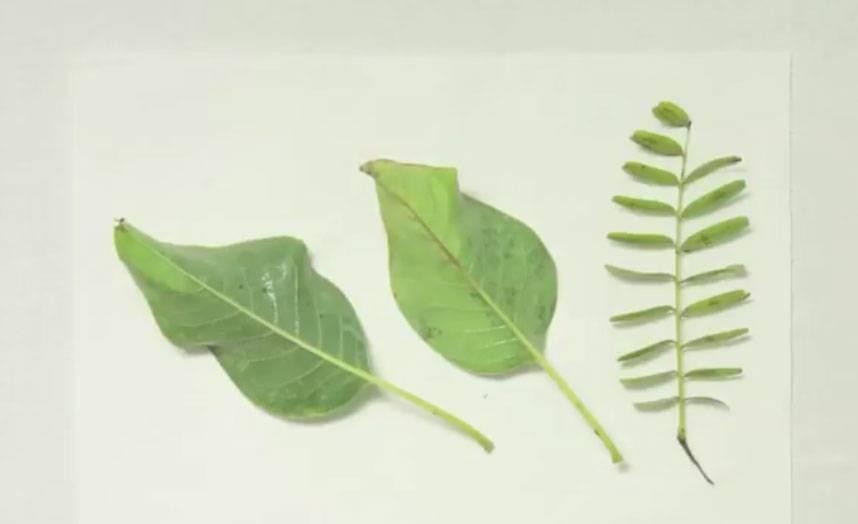 Basteln Mit Kindern Kostenlose Bastelvorlage Natur Herbarium Basteln
