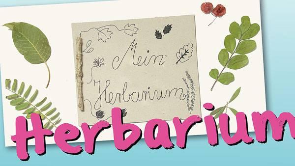 basteln mit kindern kostenlose bastelvorlage natur herbarium basteln. Black Bedroom Furniture Sets. Home Design Ideas