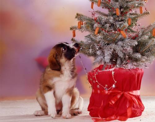 wissen ber haustiere weihnachtsgeschenke f r haustiere. Black Bedroom Furniture Sets. Home Design Ideas