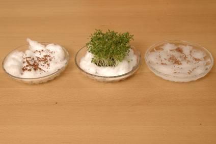 Experiment für Kinder - Sonstige Experimente: Kresse anpflanzen ohne ...