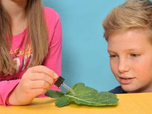 experiment für kinder  experimente natur und tiere
