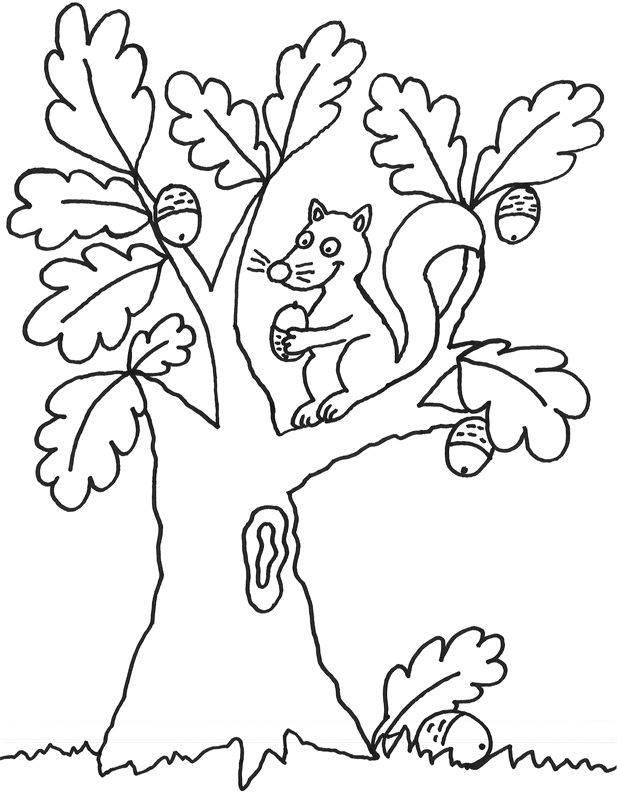 Kostenlose Malvorlage Bäume Eichhoernchen Auf Dem Baum Zum Ausmalen