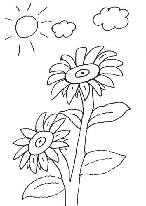 kostenlose malvorlage blumen sonnenblume zum ausmalen
