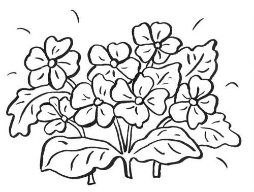 Kostenlose Malvorlage Blumen: Viele Blumen zum Ausmalen