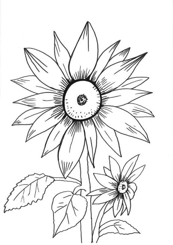 kostenlose malvorlage blumen sonnenblumen zum ausmalen. Black Bedroom Furniture Sets. Home Design Ideas