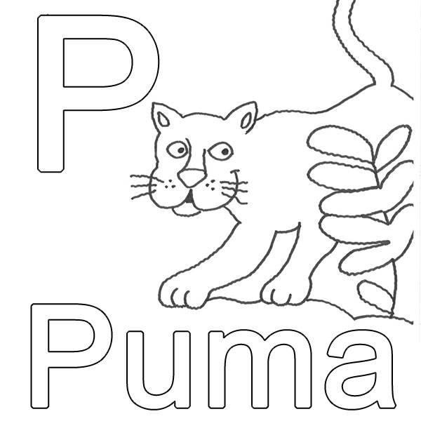 kostenlose malvorlage buchstaben lernen p wie puma zum