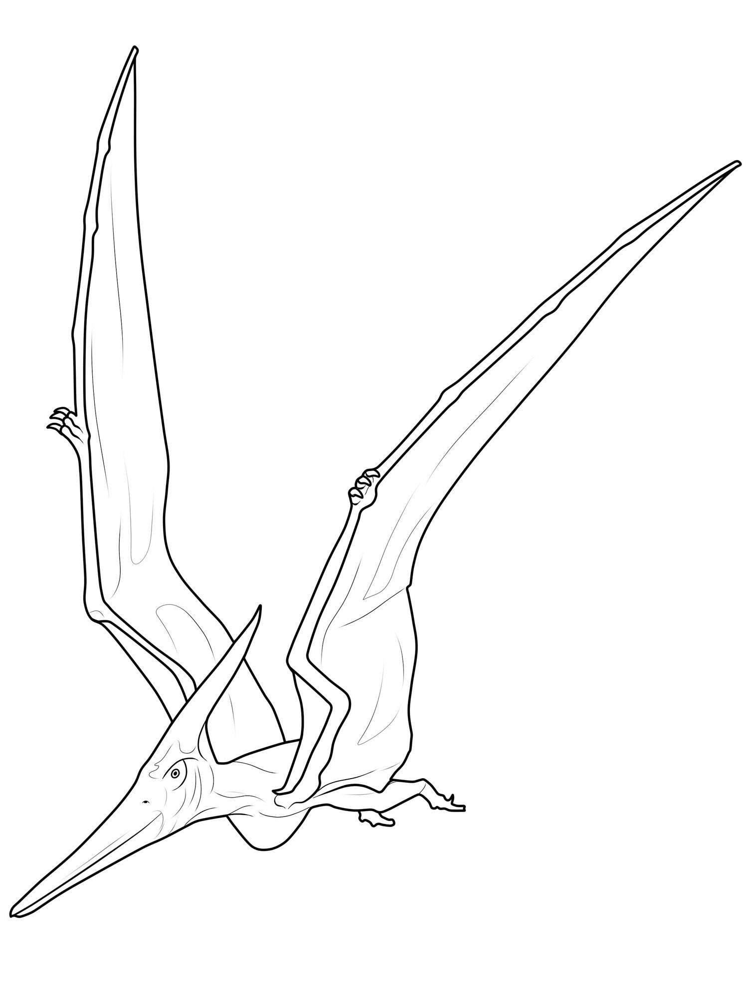 Ausmalbilder Dinosaurier Kostenlos Ausdrucken : Ausmalbild Dinosaurier Und Steinzeit Dinosaurier Pterodactyl