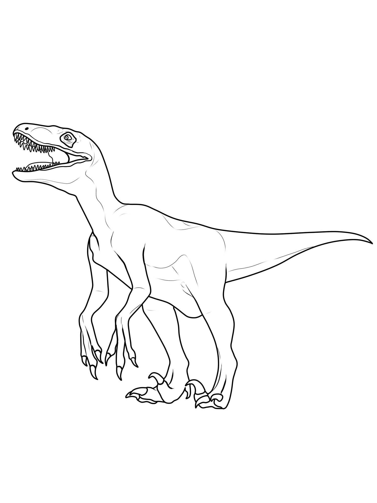 Ausmalbild Dinosaurier und Steinzeit: Dinosaurier: Velociraptor ...
