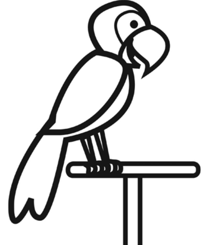 ausmalbild vögel papagei kostenlos ausdrucken