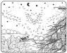 Malen nach Zahlen: Malen nach Zahlen: Fliegende Eule zum Ausmalen