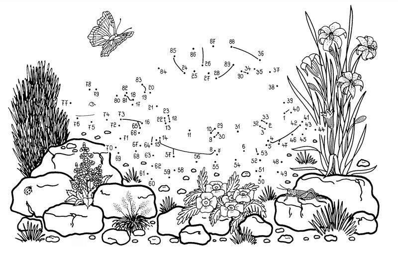 Ausmalbild Malen nach Zahlen: Schildkröte kostenlos ausdrucken