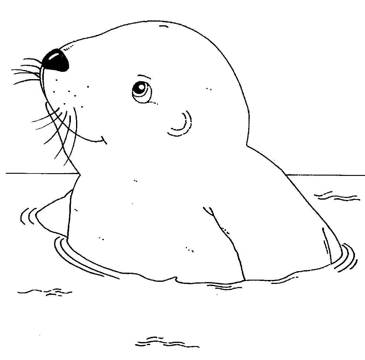 Kostenlose Malvorlage Tiere: Robbe im Wasser zum Ausmalen