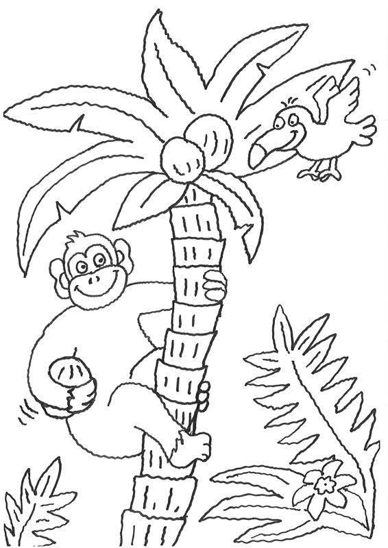 Kostenlose Malvorlage Tiere: Affe holt Kokosnüsse zum Ausmalen