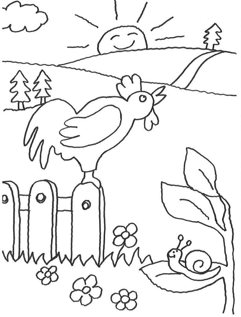 ausmalbild tiere hahn kräht kostenlos ausdrucken