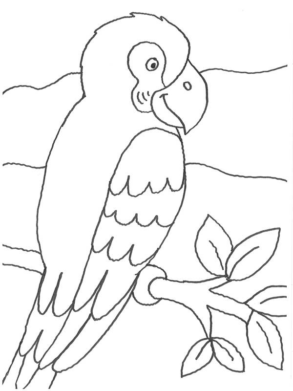 kostenlose malvorlage vögel papagei auf einem ast zum