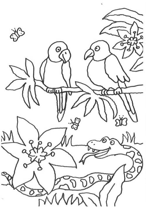 Kostenlose Malvorlage Tiere Vögel Und Eine Schlange Zum Ausmalen