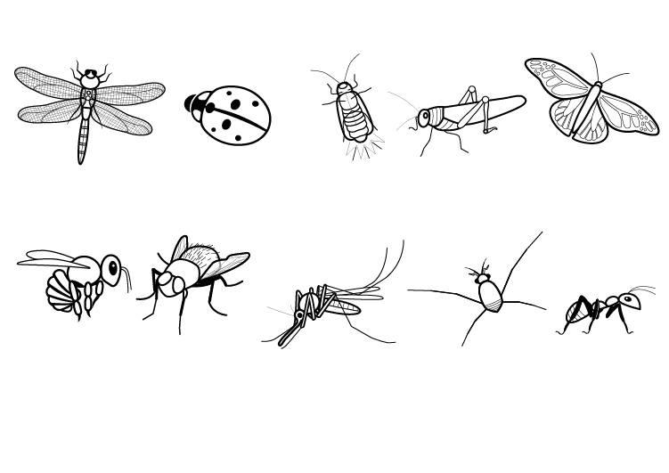 ausmalbilder insekten  image gallery