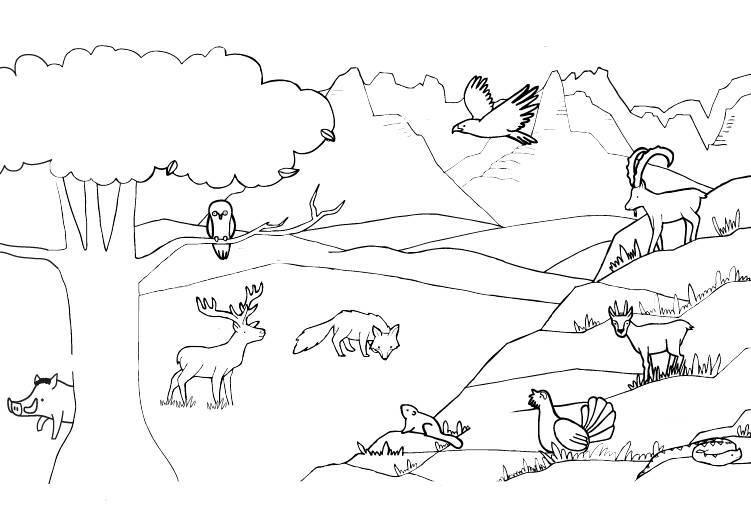 ausmalbild tiere tiere in den bergen ausmalen kostenlos