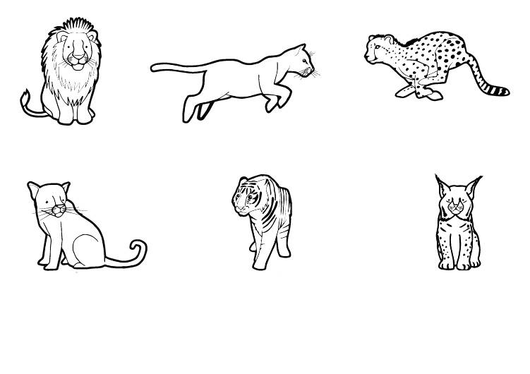 Ausmalbild Tiere Wildkatzen Zum Ausmalen Kostenlos Ausdrucken