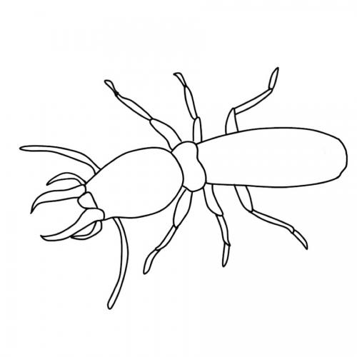 kostenlose malvorlage tiere ausmalbild käfer zum ausmalen