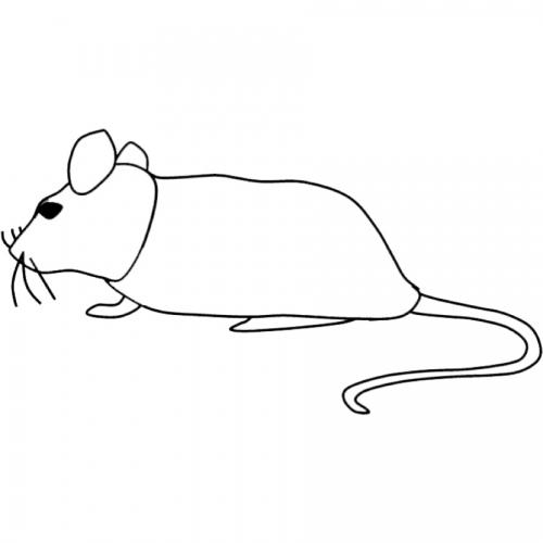 Kostenlose Malvorlage Tiere Ausmalbild Maus Zum Ausmalen