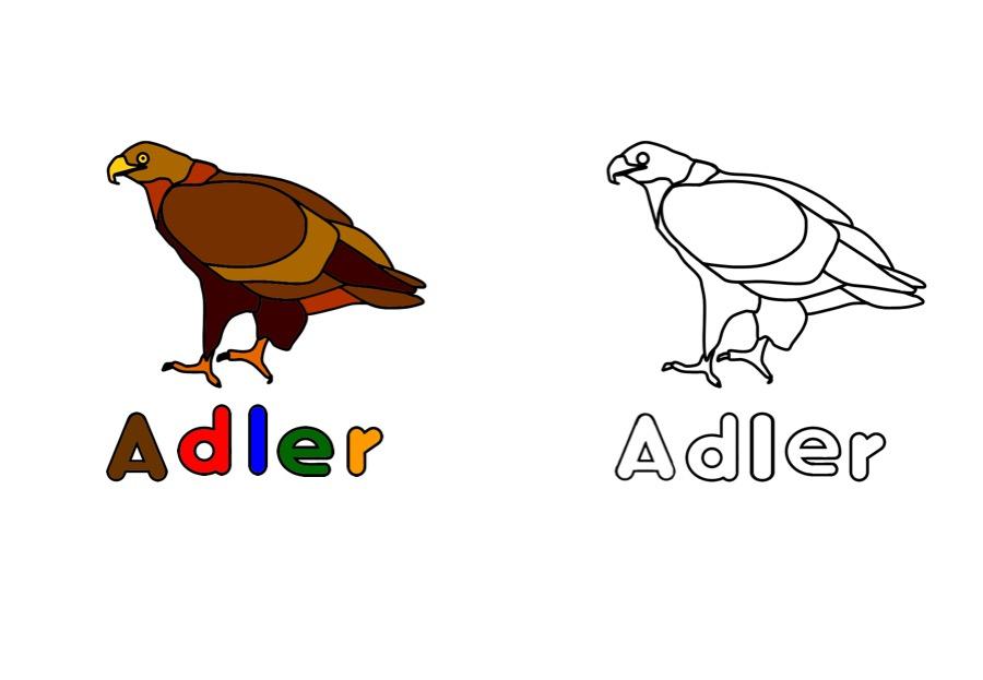 Ausmalbild Arbeitsblätter Für Kinder Ausmalbild Adler Kostenlos