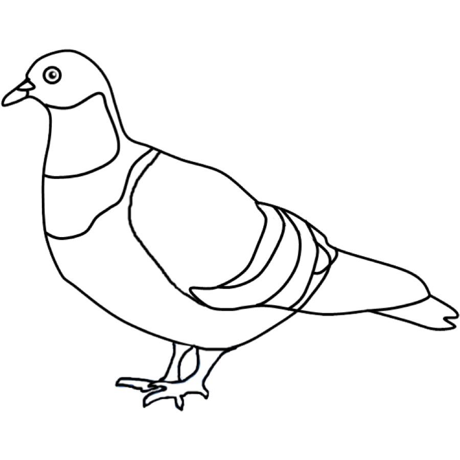 Tauben Zum Ausmalen