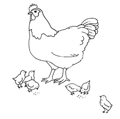 Kostenlose Malvorlage Bauernhof Huhn Und Küken Zum Ausmalen