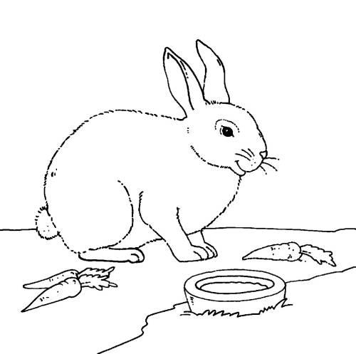 Kostenlose Malvorlage Bauernhof: Kaninchen mit Möhren zum Ausmalen
