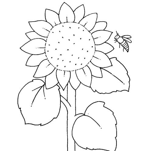 Kostenlose Malvorlage Bauernhof: Sonnenblume zum Ausmalen