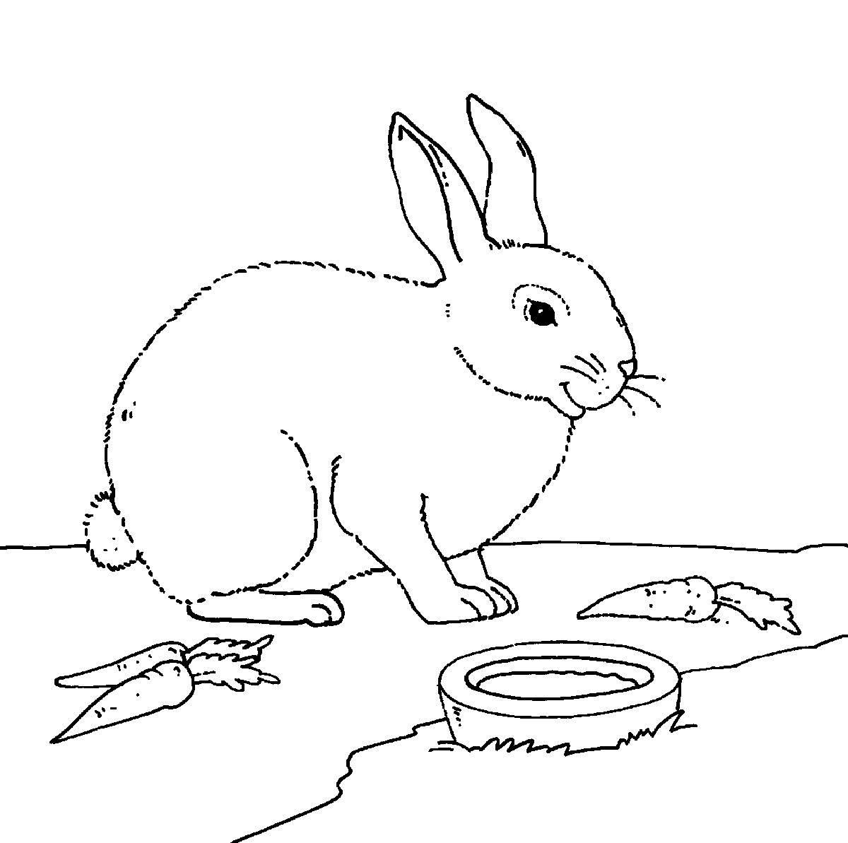 Ausmalbild Bauernhof: Kaninchen mit Möhren kostenlos ausdrucken