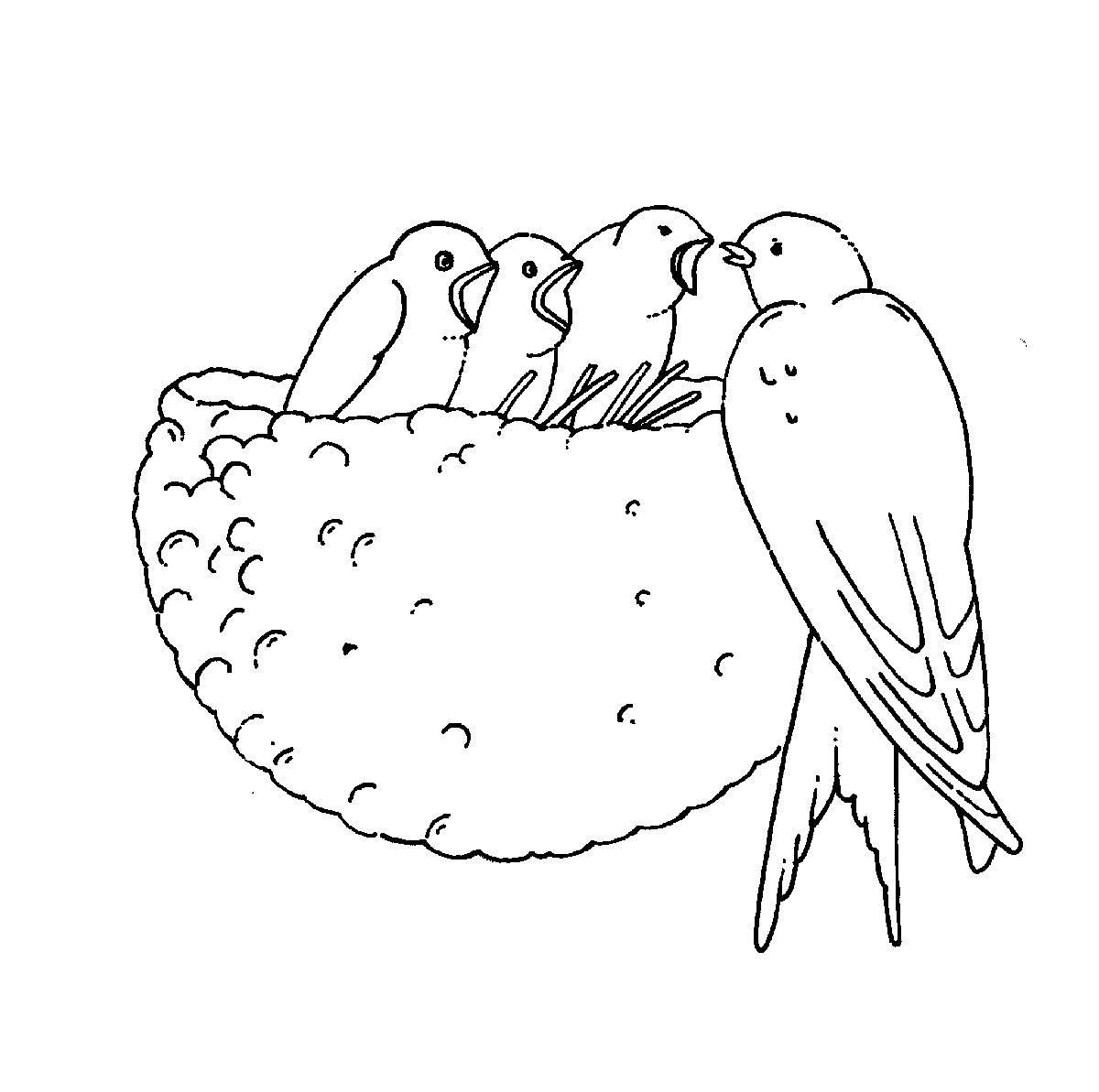 Ausmalbild Bauernhof Schwalben Im Nest Kostenlos Ausdrucken