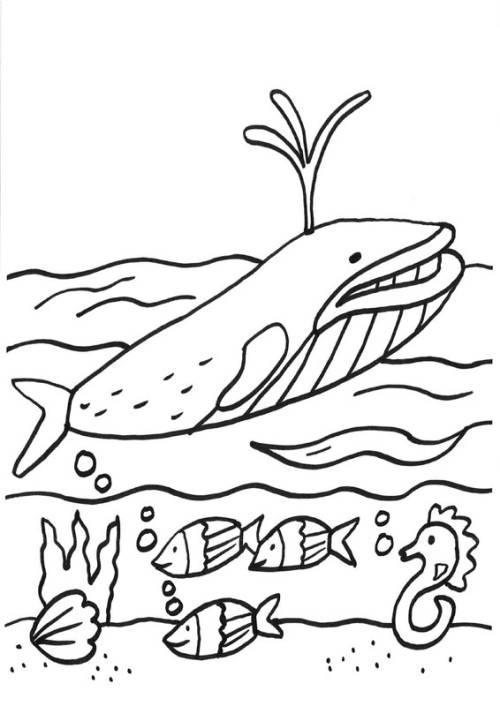 kostenlose malvorlage delfine und wale wal im ozean zum ausmalen. Black Bedroom Furniture Sets. Home Design Ideas