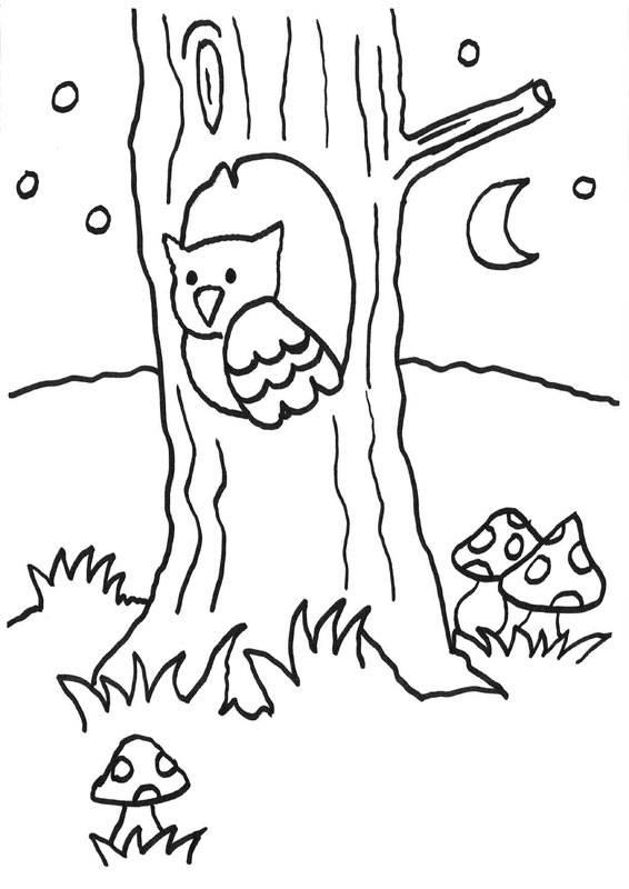 Ausmalbild Eulen: Eule im Astloch kostenlos ausdrucken