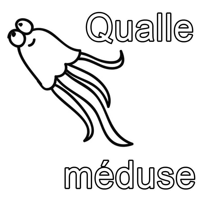 ausmalbild französisch lernen qualle  méduse kostenlos