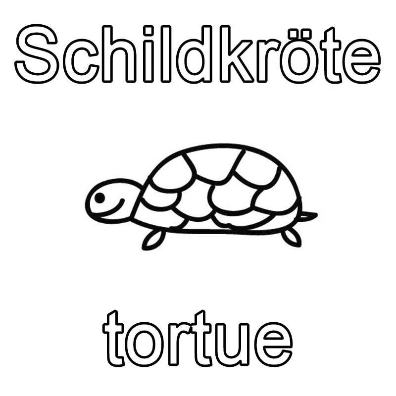 Ausmalbild Französisch lernen: Schildkröte - tortue kostenlos ausdrucken