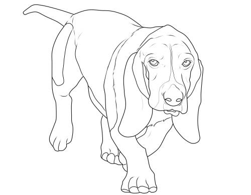 kostenlose malvorlage hunde beagle zum ausmalen