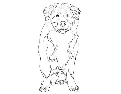 Kostenlose Malvorlage Hunde: Berner Sennenhund zum Ausmalen