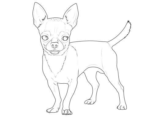 Kostenlose Malvorlage Hunde: Chihuahua Zum Ausmalen