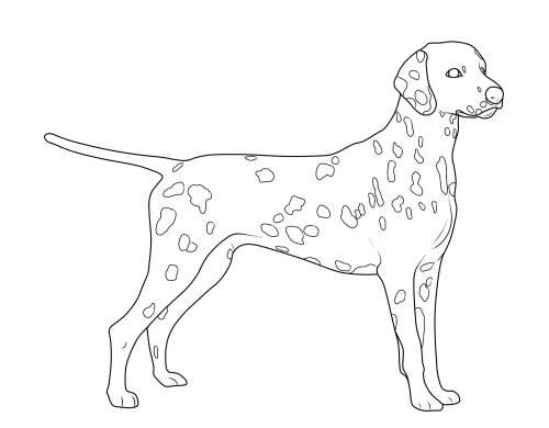 Kostenlose Malvorlage Hunde: Dalmatiner zum Ausmalen