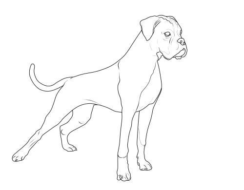 Kostenlose Malvorlage Hunde Deutscher Boxer Zum Ausmalen