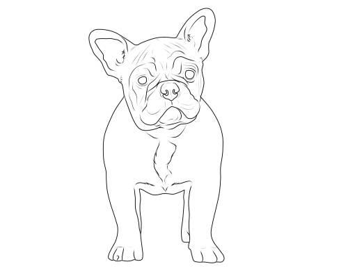 Kostenlose Malvorlage Hunde: Französische Bulldogge zum Ausmalen
