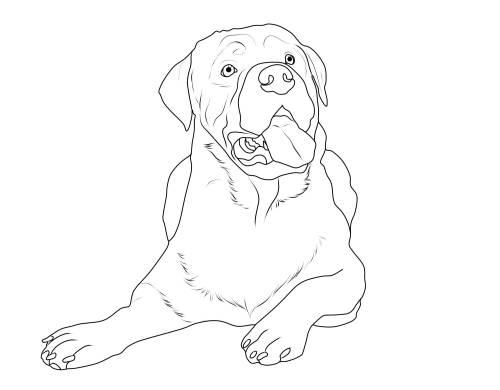 Kostenlose Malvorlage Hunde: Rottweiler zum Ausmalen