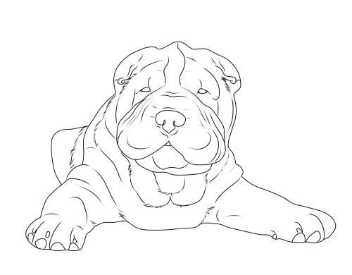kostenlose malvorlage hunde shar pei zum ausmalen