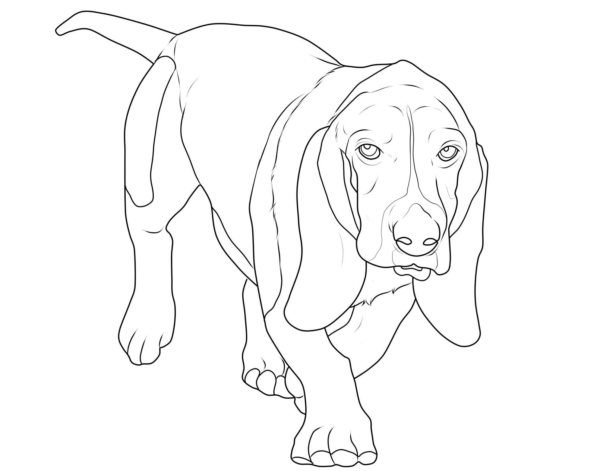 30 Hunde Bilder Zum Ausdrucken Gallery Ideas Part 4