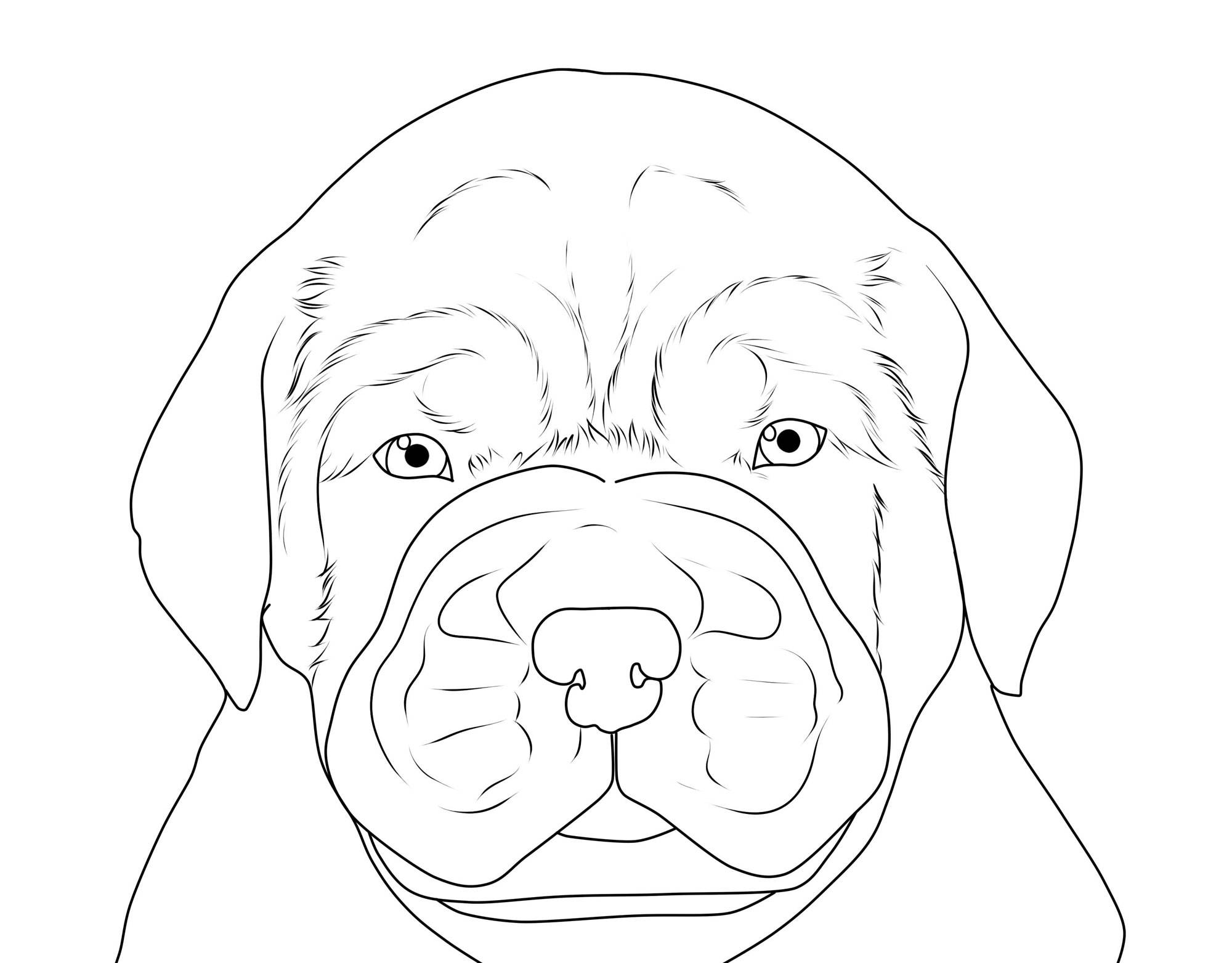kostenlose malvorlage hunde bordeauxdogge zum ausmalen