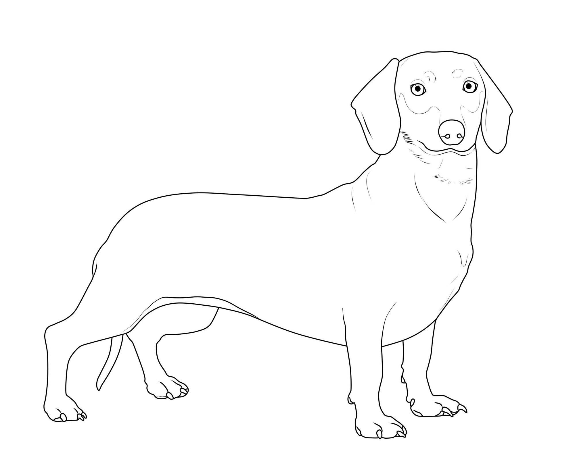 Hunde Ausmalbilder Kostenlos - Kinder zeichnen und ausmalen