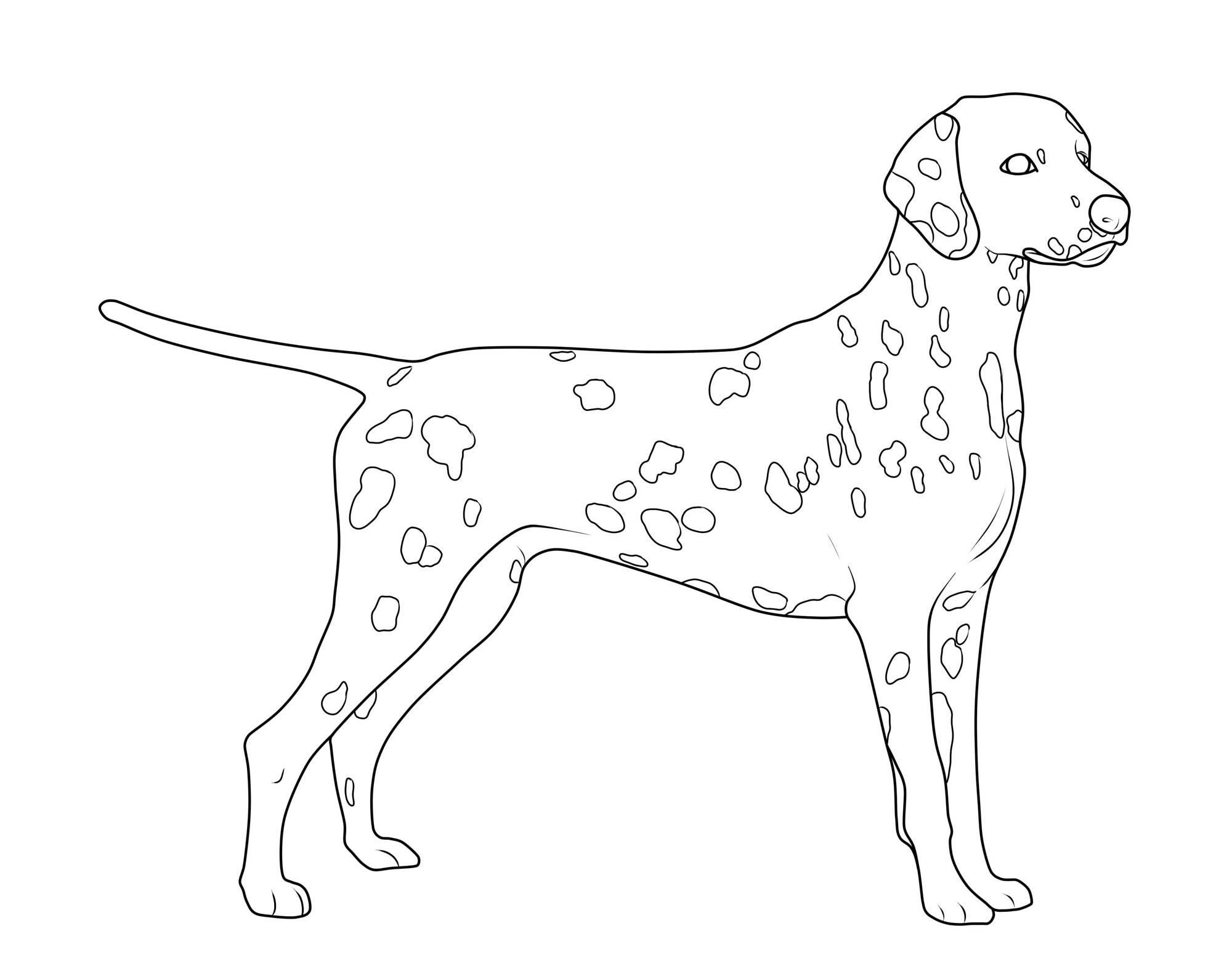 Ausmalbild Hunde: Dalmatiner kostenlos ausdrucken