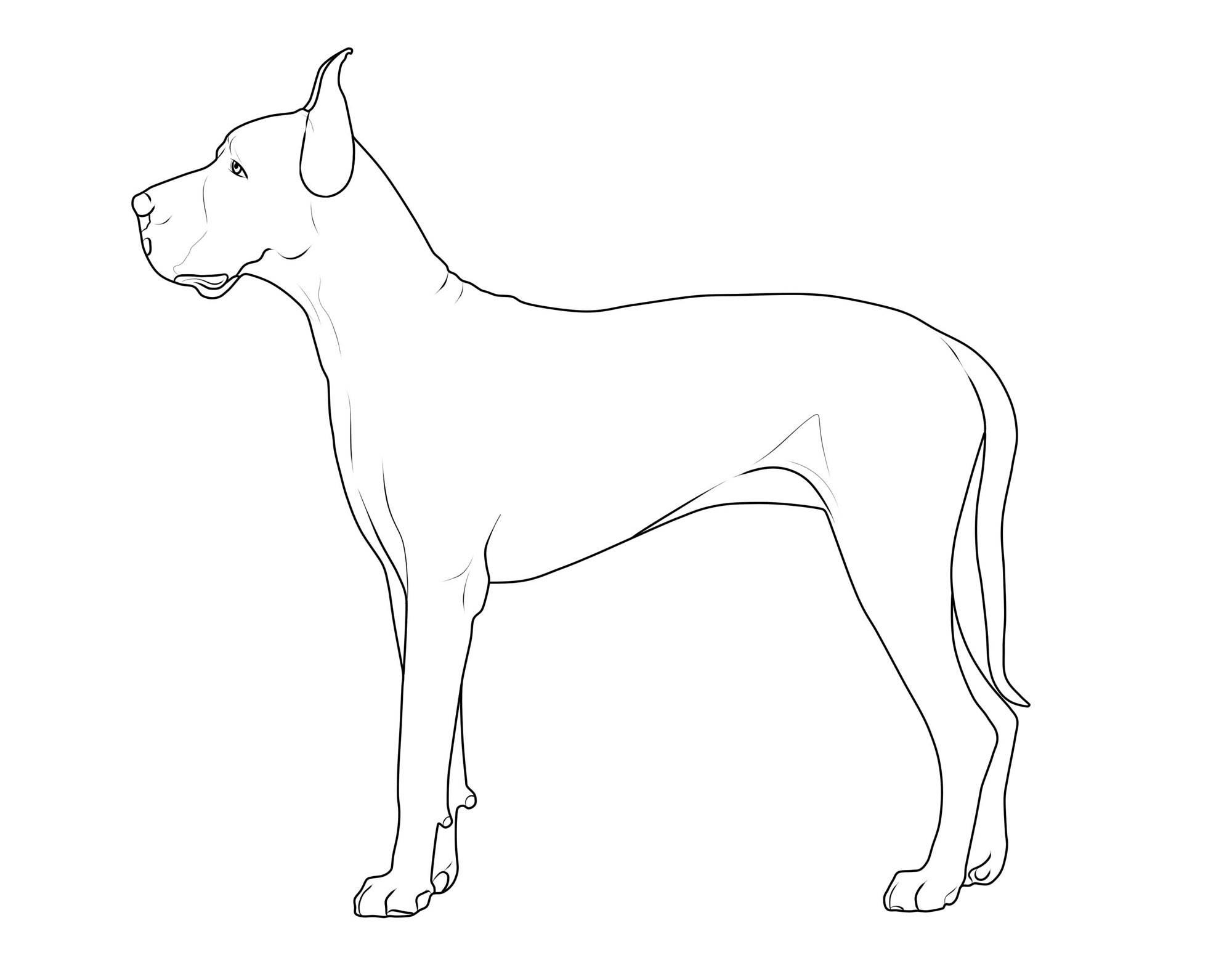 kostenlose malvorlage hunde: deutsche dogge zum ausmalen